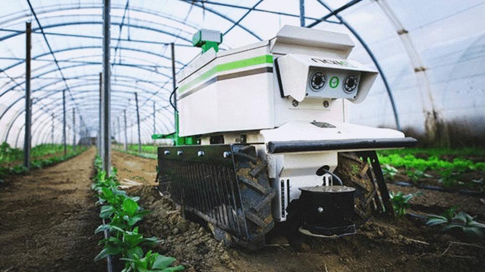 Naïo Technologies fabrica robots agrícolas autónomos