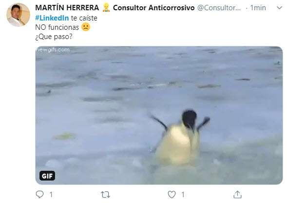 pinguino perdido buscando LinkedIn