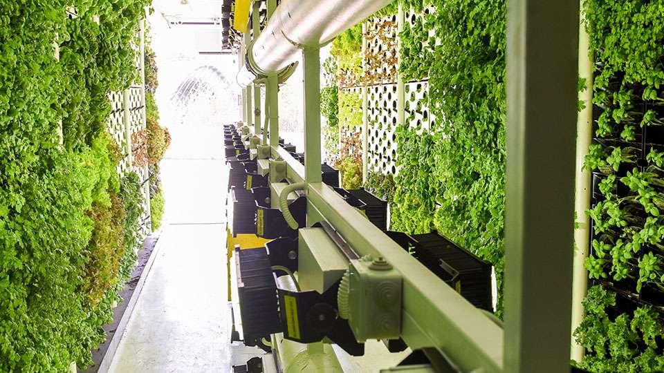 La agricultura vertical es la práctica de cultivar en capas apiladas verticalmente